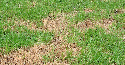 lawn dry patches