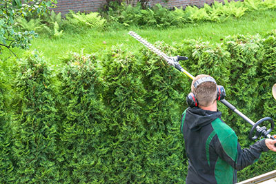 Trimming hedge tops