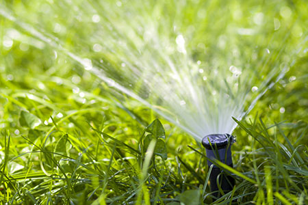 Lawn Water Sprinkler Spraying