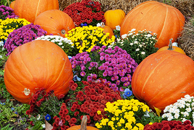 Fall Flowers and Plants for North Texas